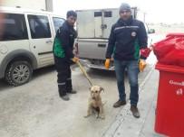 Aracın Çarptığı Köpek Hayvan Hastanesi'nde Tedavi Altına Alındı