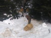 Karda Aç Kalan Yaban Hayvanları İçin Ormana Yem Bırakıldı