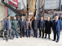AHMET AYDIN - Milletvekili Fırat 400 Yıllık Anıt Ağacı İnceledi
