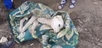 ORTEZ - Engelli Genç Felçli Köpeğe Sahip Çıktı