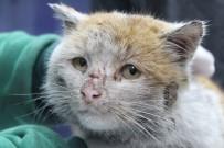 MUHITTIN BÖCEK - Depremzede Kedi 'Toros' Antalya'da Sıcak Yuvasına Kovuştu