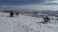 SIBIRYA - Kurtların Korkulu Rüyası Kangallar, Sibirya Soğuklarında Eğitiliyor