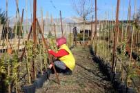 SARMAŞıK - Yeşil Bir Mardin İçin Bitki Ve Fidan Üretimine Hız Verildi