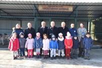 Dursunbey'de Başı Boş Hayvanlar Islah Edilecek