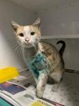 KILIMLI - Ayağı Kırık Kediye Sahip Çıktılar