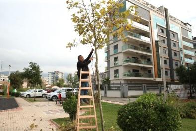 Çiğli'de Ömrünü Tamamlamış Ağaçlar Değerlendiriliyor