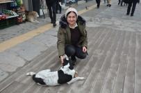SAKARYA CADDESİ - Soğuk Kış Aylarında Sokak Köpeklerine Destek Oluyor