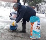 BÜLENT ÖZ - Çan Belediyesi Sokak Hayvanlarını Unutmadı