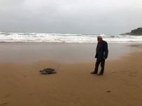 CARETTA CARETTA - Fırtınanın Kayalıklara Savurduğu Caretta Sahile Vurdu