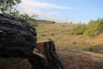 KATLIAM - Katledilen Orman Alanında Limon Fidanları Ortaya Çıktı