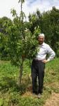 Ceviz Toplarken Ağaçtan Düşen Şahıs Hayatını Kaybetti