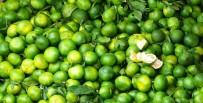 Kışlık Meyve Ve Sebzeler Tezgahlarda Yerini Almaya Başladı