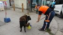(Özel) Temizlik İşçisi Süpürgesiyle Sokak Köpeğine Masaj Yaptı