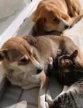Sokak Köpeği Kediye Annelik Yapıyor