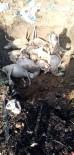 Biga'ya Yıldırım Düştü, 13 Koyun Telef Oldu