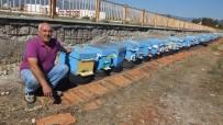 Burhaniye'de Yağmurlar Zeytincilerden Sonra Arıcıları Da Sevindirdi