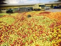 Eğirdir'de Iskarta Elmanın Kilosu 65 Kuruştan Alınıyor