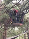 Balıkesir'de Ağaçta Mahsur Kalan Kediyi İtfaiye Kurtardı