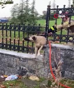 Demir Korkuluklara Sıkışan Köpeğin İmdadına İtfaiye Koştu