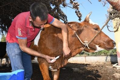 Mersin'de Üç Gün Hastalığı