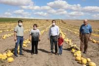 Eskişehir'de Çerezlik Kabak Üretim Alanı 30 Bin Dekara Ulaştı