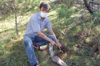 Kızgın Damadın Ormanlık Alanı Sulayarak Yetiştirdiği Mantarlar Yok Satıyor