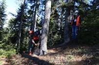 Orman İşçilerinin Sınavı Ormanda Olur