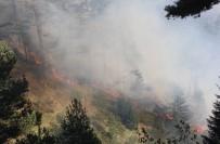 Kastamonu'da İki Farklı Noktada 3 Gündür Devam Eden Orman Yangını Söndürülemiyor