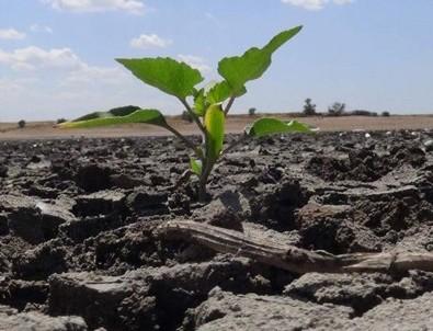 Son 91 yılın en kurak dönemi