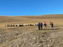 Damal'da Kayıp Hayvanlar Drone İle Bulundu