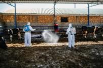 Büyüköztürk Açıklaması 'Üç Gün Hastalığı Hayvandan İnsana Geçmiyor'
