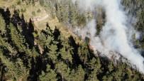 Kastamonu'da 5 Günde Söndürülen Orman Yangınları Tekrar Başladı