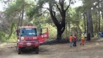 Manavgat'a 3 Günde 6 Orman Yangını