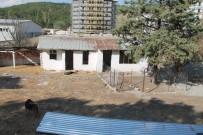 Amasya'da Köpek Ölümleri İddiası