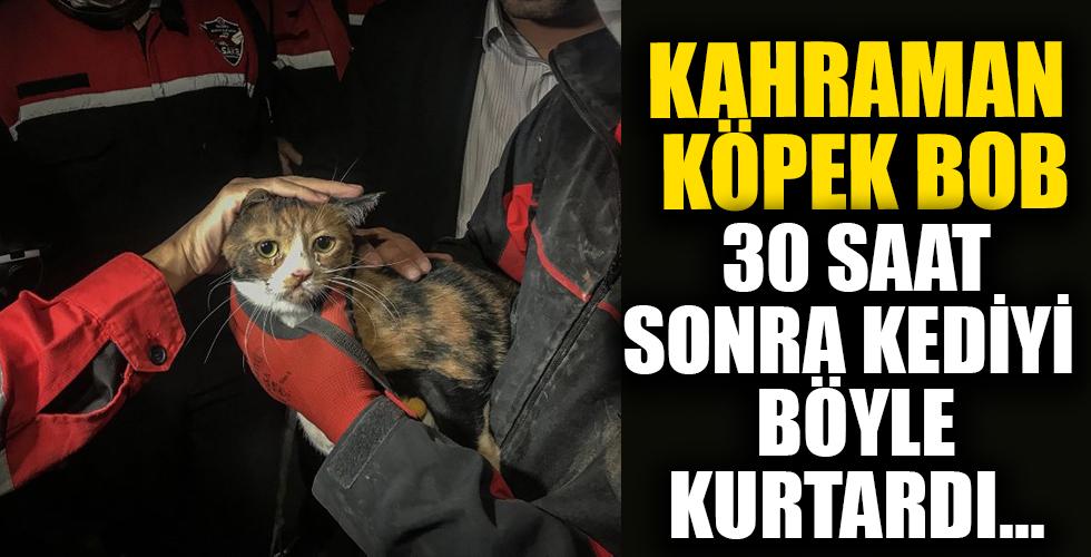 İzmir depreminde gelişme! Kahraman köpek 'Bob' enkazdan kedi kurtardı
