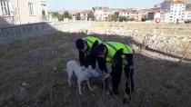 Afyonkarahisar'da Kafası Pet Şişeye Sıkışan Sokak Köpeği, Jandarma Ekiplerince Kurtarıldı
