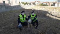 Kafası Pet Şişeye Sıkışan Köpeğin İmdadına Jandarma Yetişti