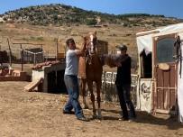 Erdek'te Eşek, Katır Ve Atlara Kimlik
