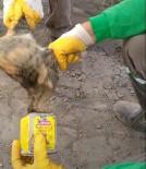 Kafası Teneke Kutuya Sıkışan Kediyi Temizlik İşçisi Kurtardı