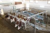 Hollanda'da Yaşayan Gurbetçi Vatandaş Tarım Ve Hayvancılık İçin Türkiye'ye Döndü