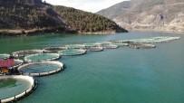 Borçka Barajı'nda Üretilen Türk Somonları Dünyaya İhraç Ediliyor