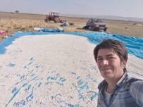 Manyas'ın Meşhur Kazak Fasulyesinin Hasadı Başladı