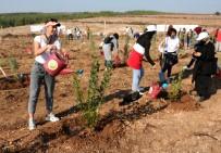 Adana'da 50 Bin Fidan Toprakla Buluştu