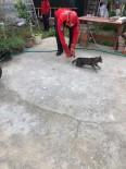 Burhaniye'de Kedi Kurtarma Operasyonu