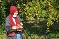 İstanbullu Gençler Sarıcakaya Da Nar Hasadı Yaptı