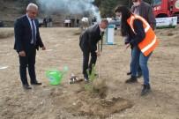 Tosya'da Bin Adet Fidan Toprakla Buluştu