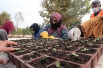 Şanlıurfa'da Çiçek Üretimi