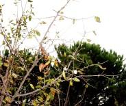 Yalancı Bahar Erik Ağacına Çiçek Açtırdı