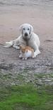 Manyas'ta Kedi İle Köpek Dostluğu