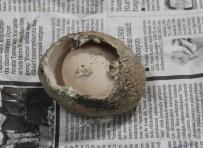 Milyonda Bir Görülüyor Açıklaması 4 Katmanlı Yumurtadan Yumurta Çıktı